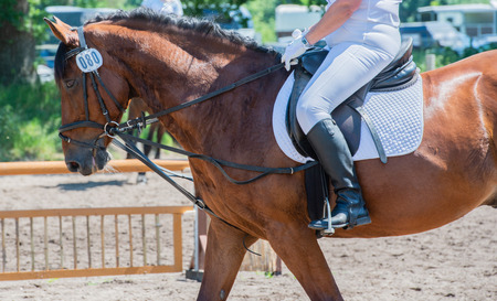 Equestrian sport on a dressage course Stock Photo