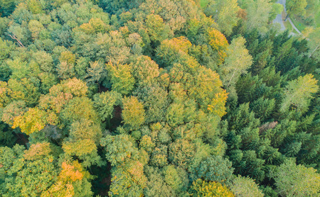 Aerial view of a mixed forest