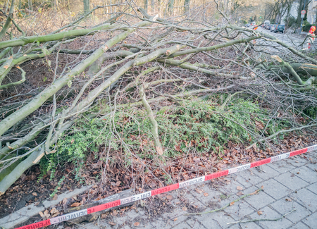 Storm in Hamburg trees overturned with cordon tape Fire Department Sperrzone English text for fire department restricted area