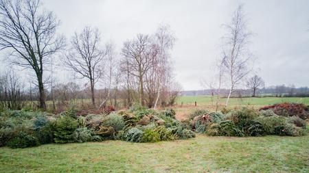 Christmas tree disposal after Christmas
