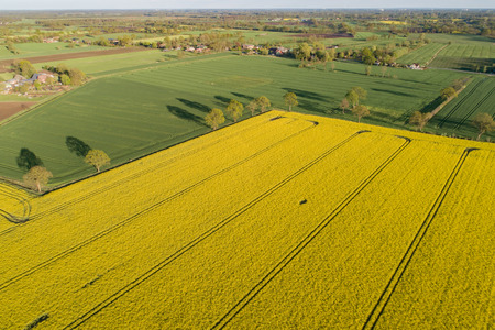 Drone's flight and aerial view over a rape field Standard-Bild