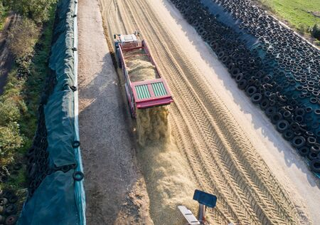 Corn crop, corn silage pile with tractor stucco