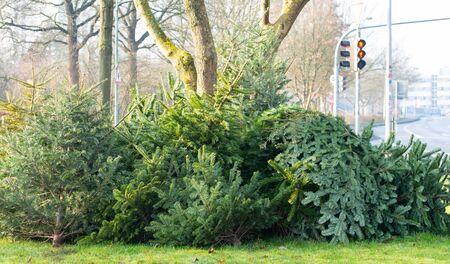 Christmas tree disposal after Christmas, waste disposal Stok Fotoğraf