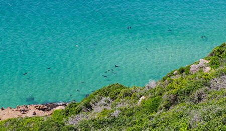 South African for seals rest and swim on the South Atlantic coast of South Africa
