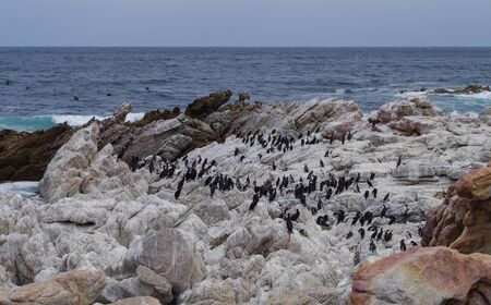 African penguins and cormorants on Boulders Beach in Simon's Town South Africa