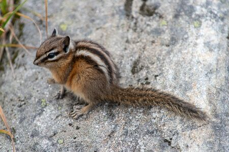 Little chipmunk on a stone Stok Fotoğraf