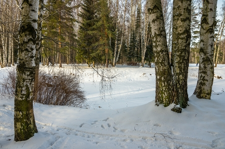 vicinity: Winter landscape in the vicinity of St. Petersburg Stock Photo