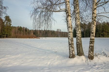 vicinity: Russian winter landscape in the vicinity of St. Petersburg