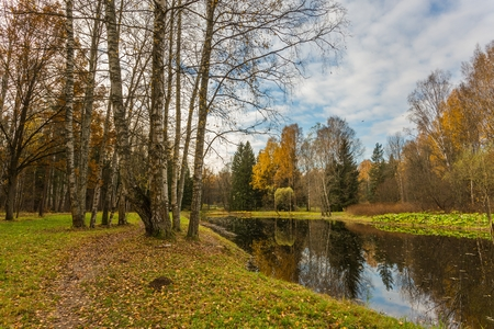 leningrad: Nature of Leningrad region of Russia with the yellow leaves on the trees, falling leaves and reflections on the water surface.