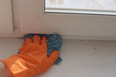 The human hand in an orange protective glove with a blue damp rag wipes the sill to reduce allergens and give freshness to the room. 写真素材