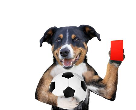 dog with a white soccer ball and a red Card Фото со стока