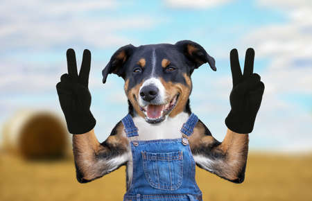 hello goodbye high five dog in jeans dungarees Banco de Imagens