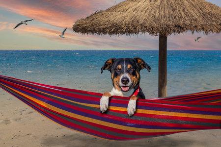dog on hammock in summer, dog at the beach Banco de Imagens