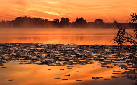 Morning foggy sunrise on the lake - summer landscape