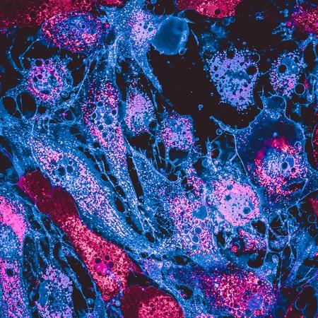 Image confocale de mitochondries dans les cellules à vapeur mésenchymateuses. Les mitochondries sont marquées avec une coloration rose, les cellules mebranes sont en bleu Banque d'images
