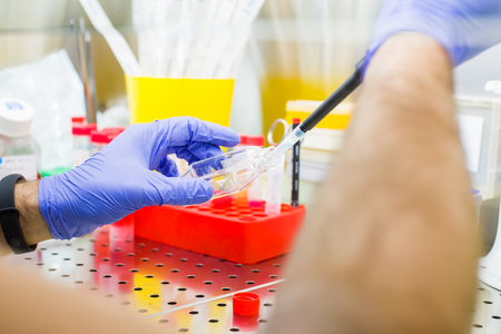 Scientist researching in laboratory, pipetting cell culture medium samples in laminar flow