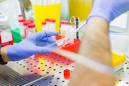 Científico que investiga en laboratorio, pipeteo de muestras de medio de cultivo celular en flujo laminar Foto de archivo