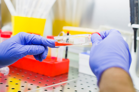 Scientist researching in laboratory, pipetting cell culture medium samples in laminar flow Standard-Bild - 106362571