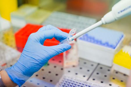 Científico que investiga en laboratorio, pipeteo de muestras de medio de cultivo celular en flujo laminar