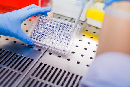 Scienziato che ricerca in laboratorio, pipettando campioni di terreno di coltura cellulare in flusso laminare
