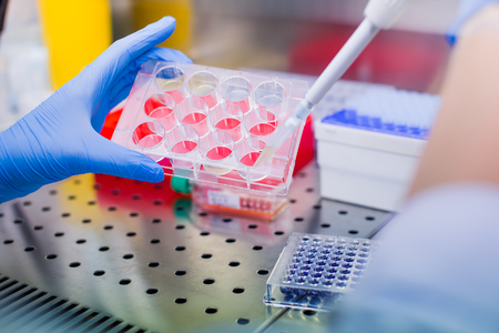 Scientist researching in laboratory, pipetting cell culture medium samples in laminar flow Standard-Bild - 106362588