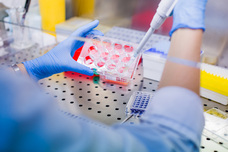 Scientist researching in laboratory, pipetting cell culture medium samples in laminar flow Standard-Bild - 106362590