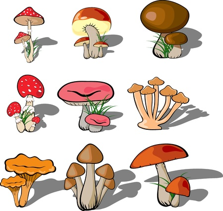 mushroom forest set vector Stock Vector - 10963931