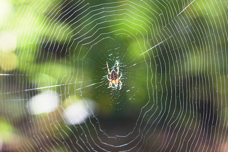 The Spider Web natural background