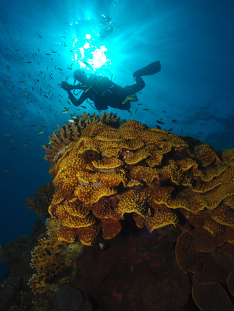 A diver hovers above a salad coral in the Red Sea