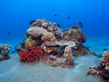 Coral reef seascape in the red sea