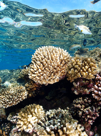Coral reef reflected by the surface of the ocean Stock Photo