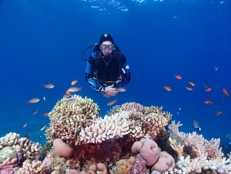 Scuba diver hovers behind a coral reef in the Red Sea Standard-Bild