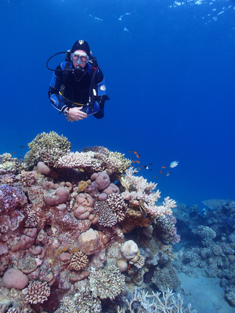 divers: Scuba diver swims above a coral garden Stock Photo