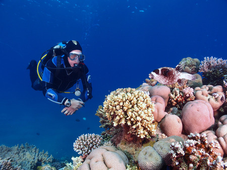 A diver watches fish on a coral reef Standard-Bild