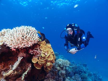 A scuba diver and corals