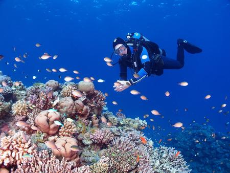 A diver swims across a coral garden Standard-Bild