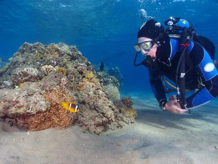 A scuba diver and a sea anemone with anemonefish Standard-Bild