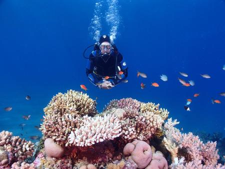 A scuba diver swims over a coral garden