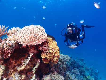 A diver hovers beside a coral reef in the Red Sea Stock Photo - 34392874