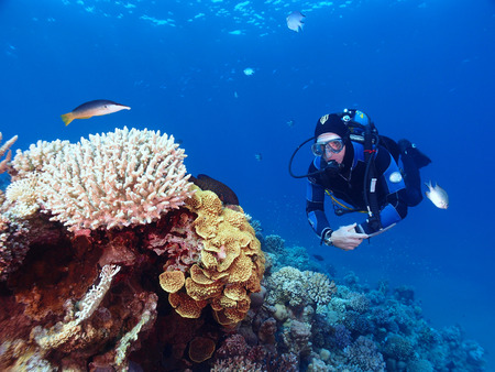 A scuba diver with corals and fish