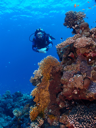Scuba diver hovers behind a coral reef in the Red Sea Stock Photo