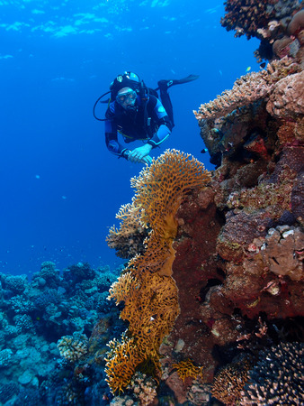 A diver hovers beside a coral reef