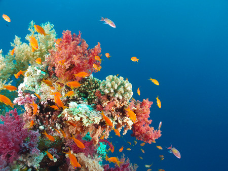 Corals and fish in the Red Sea Stock Photo