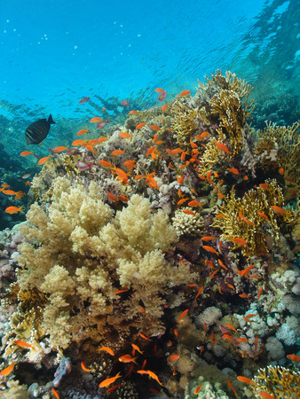 Shallow water coral reef.