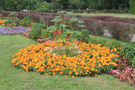 . charming flowerbed with flowers in the botanical garden
