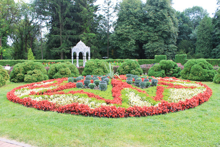 original flower bed-star sprawled in the botanical garden Stock Photo - 112985259