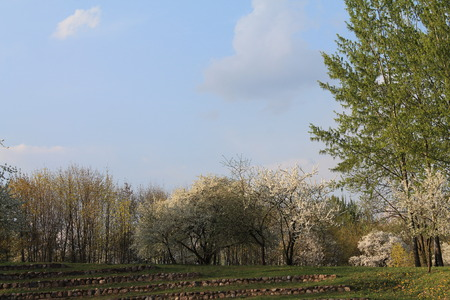 Beautiful spring clouds float above a flowering garden.