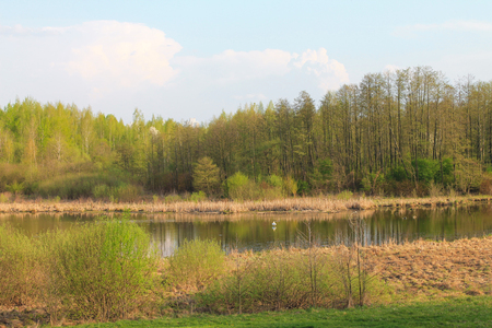 Spring landscape. Fresh spring foliage flaunts in the mirror of the river.