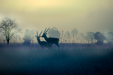 Morning at blackbuck reserve Stock Photo