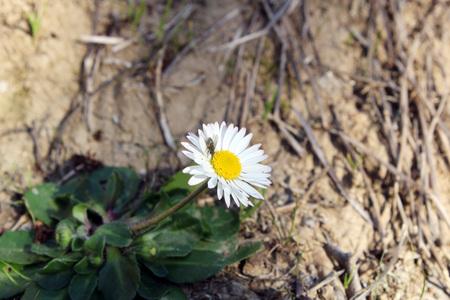 pollination Фото со стока - 96689861